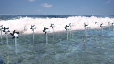 Japanese researchers designed submerged marine turbines inspired by the movement of a dolphin's fin
